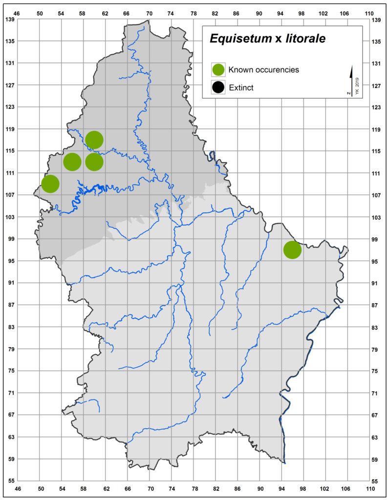 Map of Equisetum x litorale